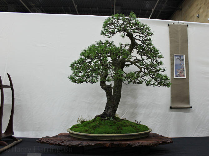 Images From The Expo Bonsai Uk 2018 Show
