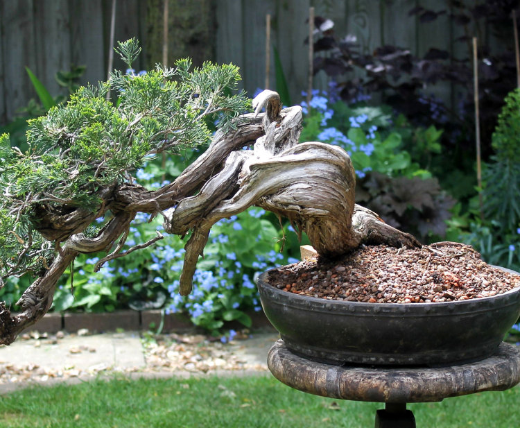 Creating Deadwood For Bonsai By Hand