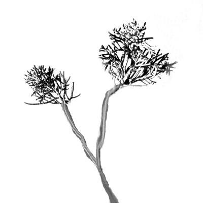 Tipos de arbustos de enebro | Inicio Guías | Puerta SF