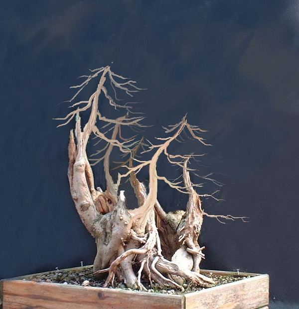 virtual design shows the bonsai