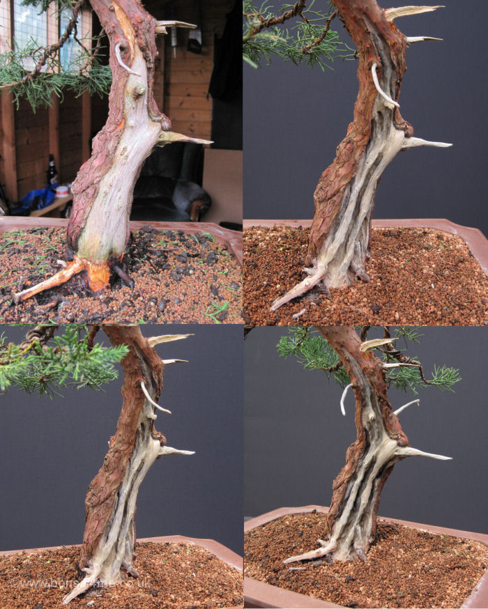 juniper bonsai carving