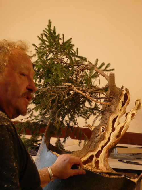 kevin wilson bonsai carving
