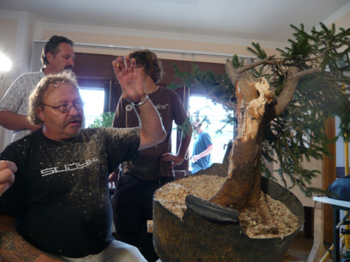 kevin wilson bonsai