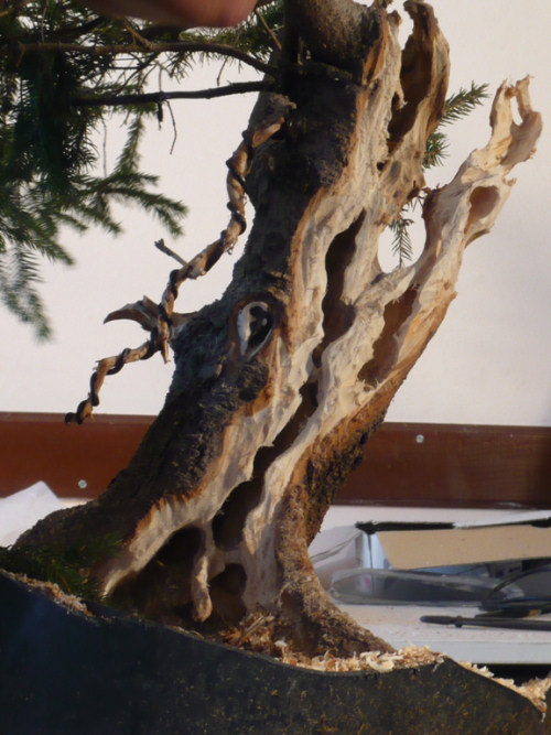 bonsai carving jin