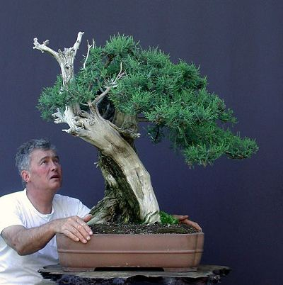 Bonsai Collecting Trees From The Wild Part One