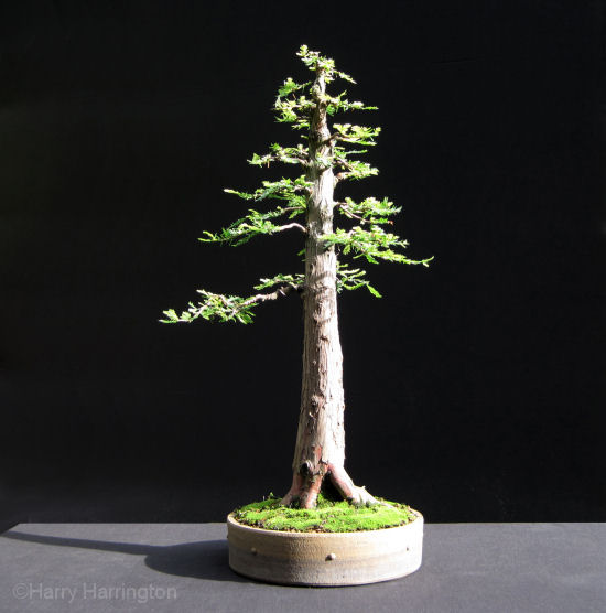 Styling The Basic Forms Of Bonsai