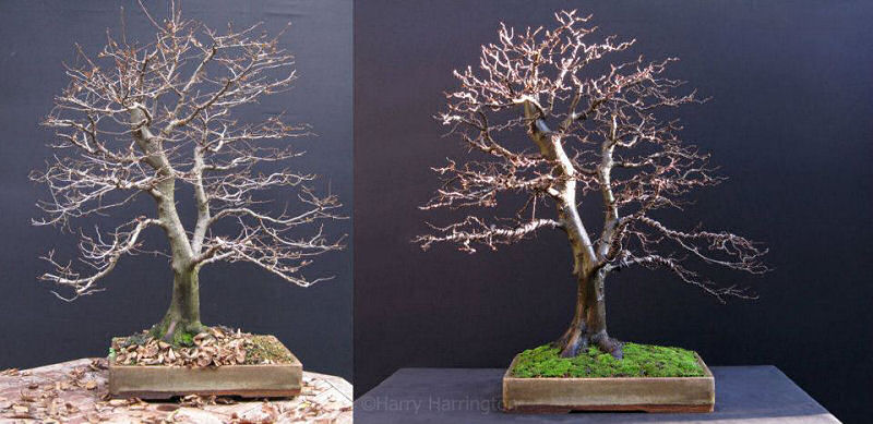 wiring bonsai rh bonsai4me com Bonsai Styles Bonsai Copper Wire